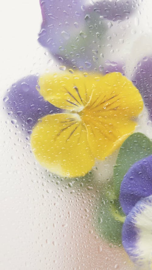 A Beautiful Flower Behind a Transparent Glass