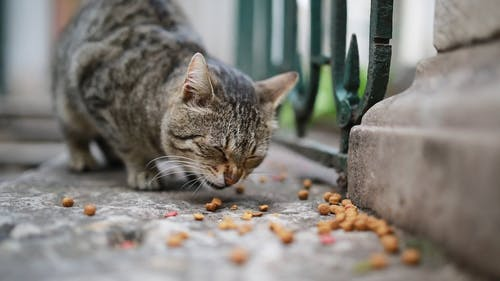 Close Up Video of a Cat