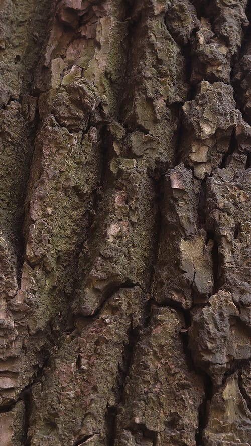 Detail of Natural Texture