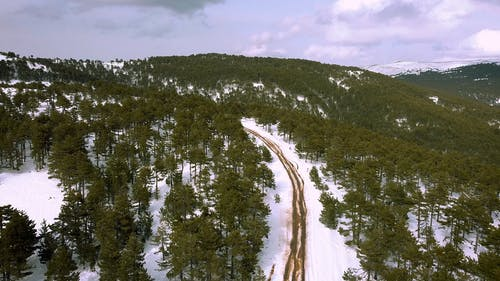 Dirt Road Crossing Through Forest in Winter