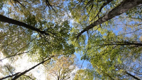 Low Angle Shot of Trees