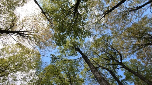 Low Angle Shot of a Trees