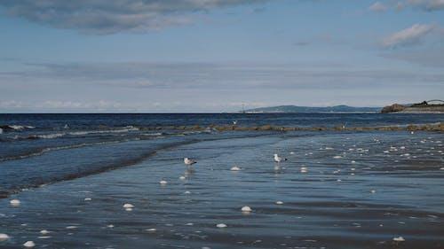 Birds in the Seashore