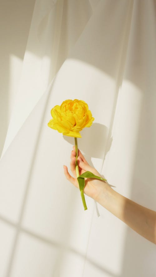 Holding A Yellow Flower