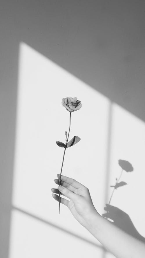 Person Holding a Rose