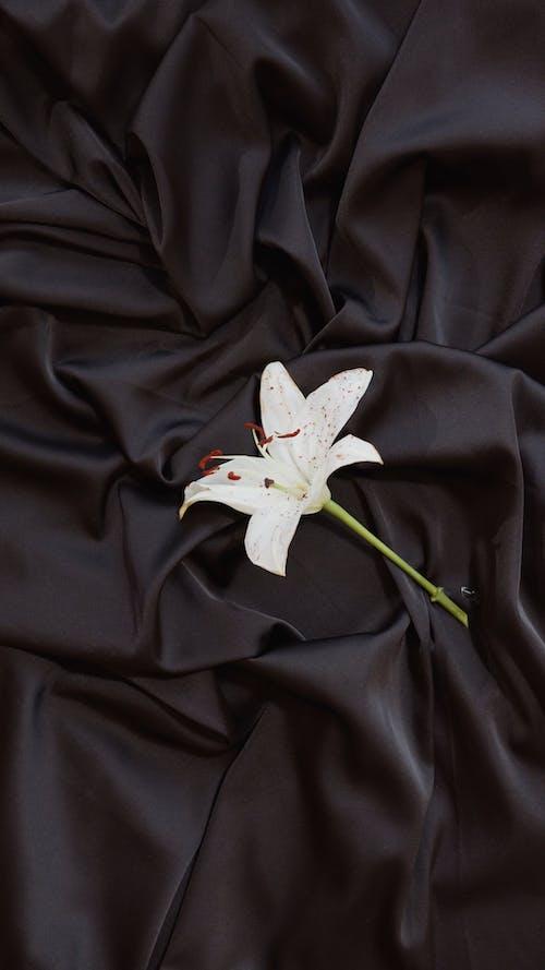 A Flower on a Black Fabric Cloth Background