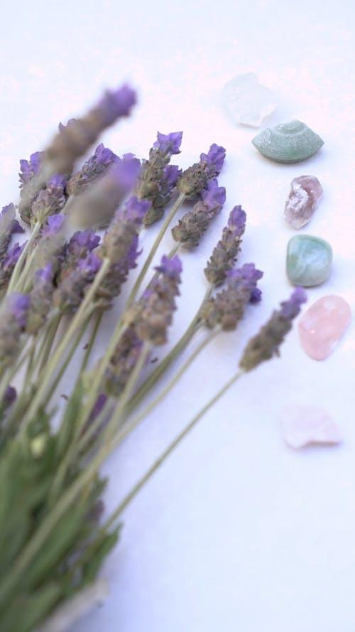 An English Lavander Flowers