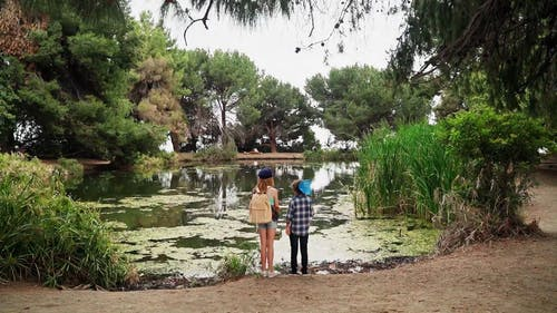 Back View Footage of Children Standing on the Edge of a Pond
