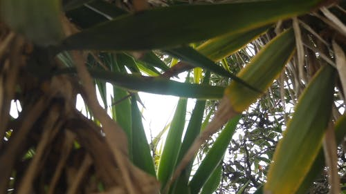 Close-Up Footage of Green Leaves
