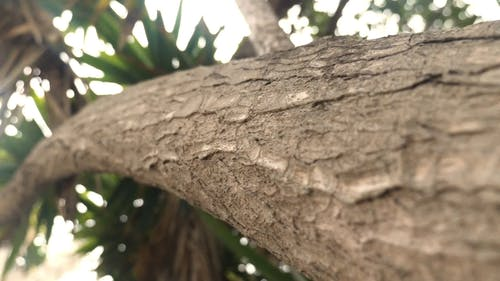 Close-Up Footage of a Tree Branch