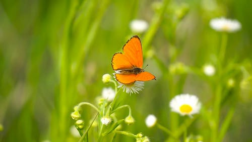 Close Up View of a Butterfly in the Flower