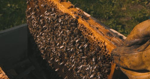 A Person Putting a Beehive in a Box