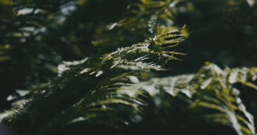 Focus Shot of a Plant