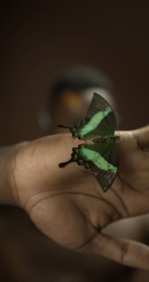 A Man Showing a Butterfly on his Palm