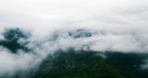 Cloud Formation on a Forest