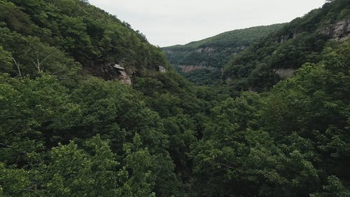 Drone Footage of a Dense Forest