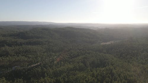 Aerial Footage of a Dense Forest