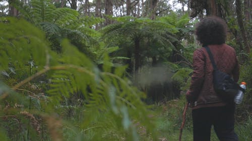 A Person Walking in a Forest