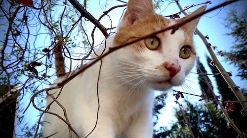 Closeup Video Of a Cat
