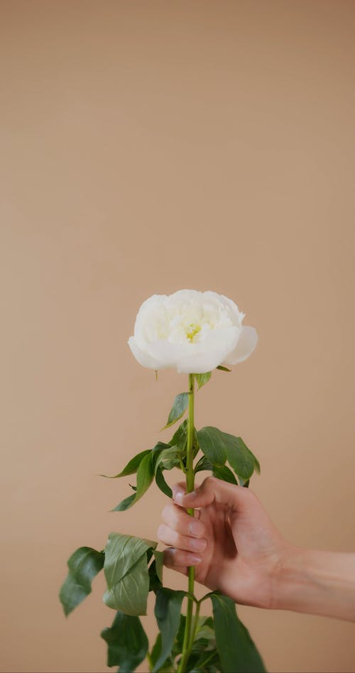 A Person Holding a Flower