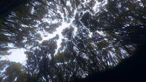 Low Angle View of a Trees