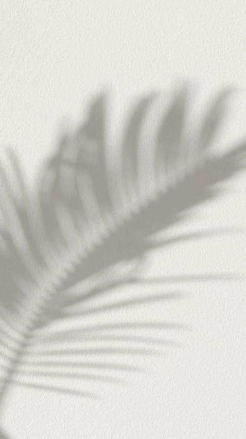 A Shadow of a Palm Leaf