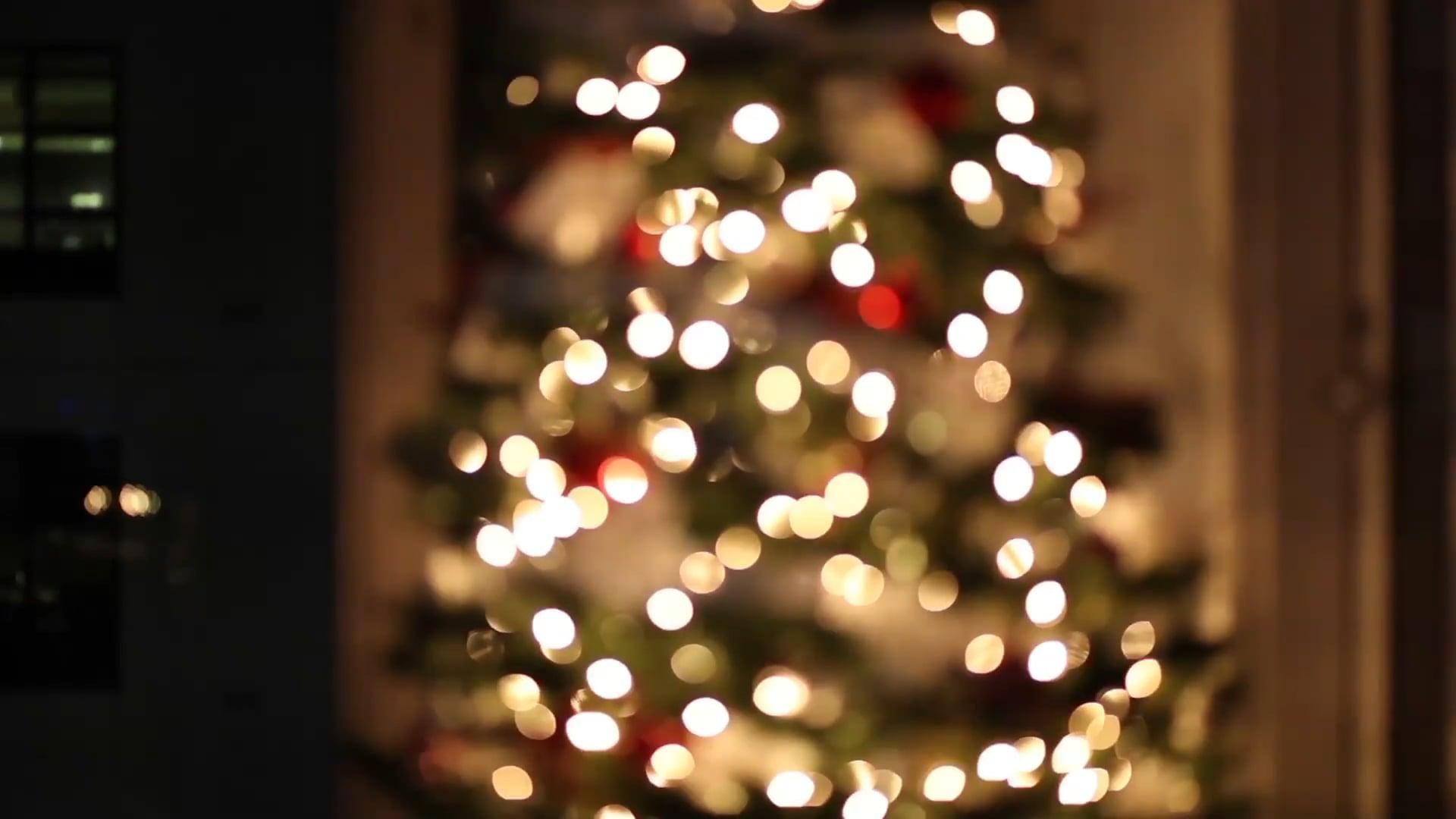 Christmas Tree Free Stock Video