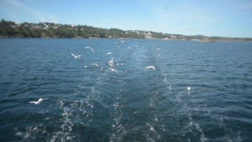 Birds Flying Low Over Water