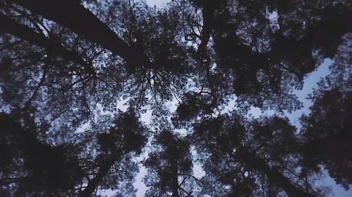 树木从下面的视频