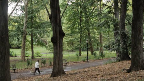 Woman Walking The Dog At The Park