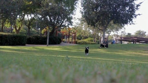 Playing With The Dog At The Park