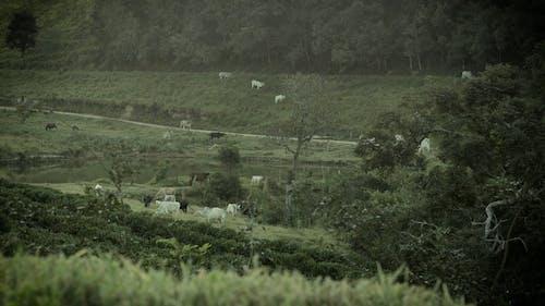 Animals In Farm