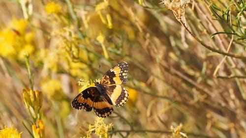 Mariposa Volando Lejos De Una Flor