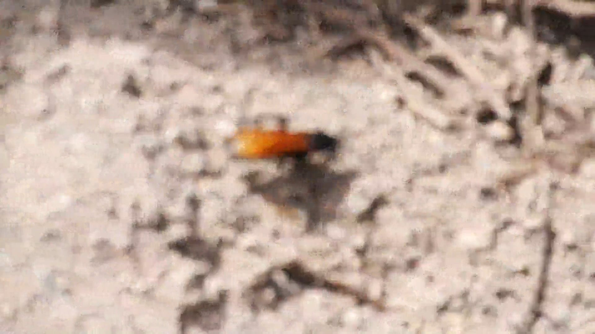 Crawling Insect