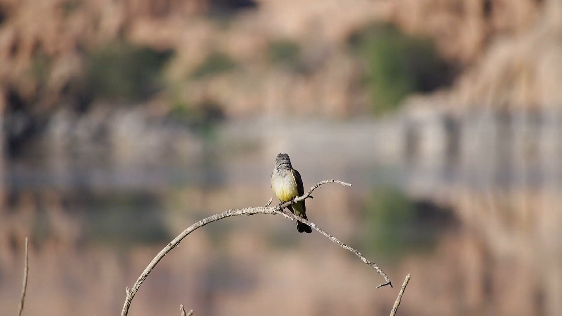 Bird Perched on a Bent Branch