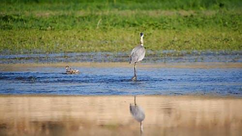 Animal Walking On Body Of Water