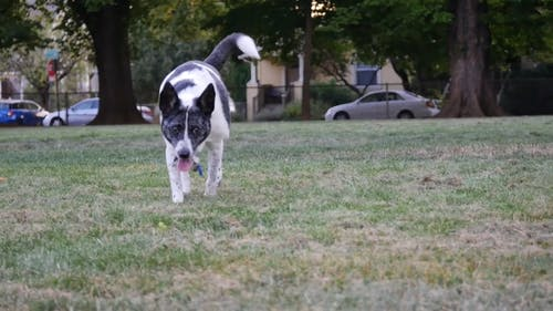 Dog Walking On Grass