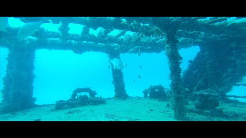 Underwater Video of Fishes Swimming Around a Ship Wreckage
