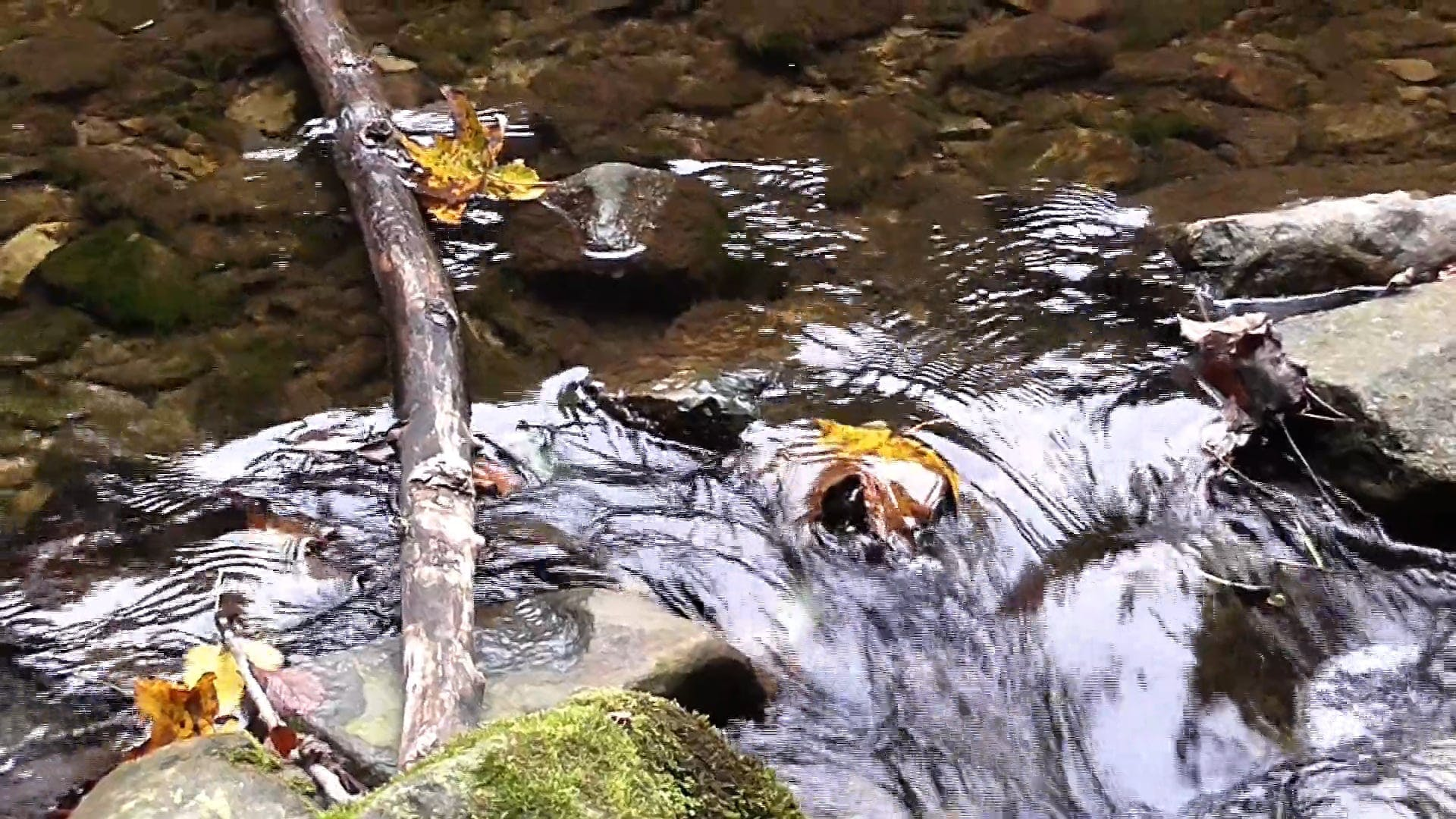 Video Of River Flowing