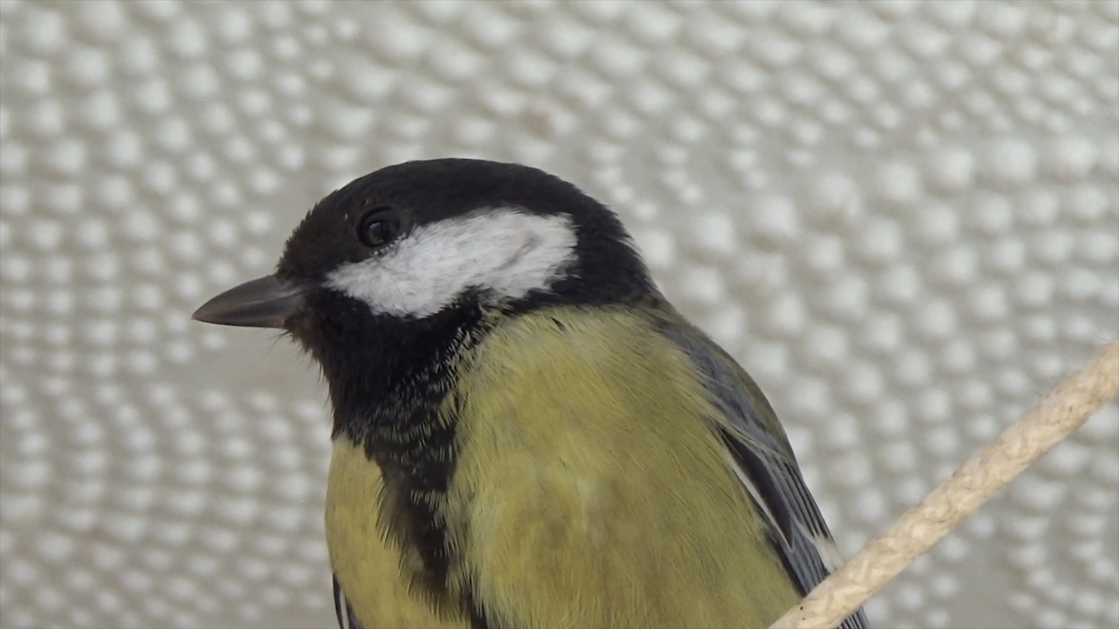 Close-Up Video Of Bird