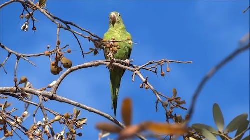 Video Of Parakeet Bird
