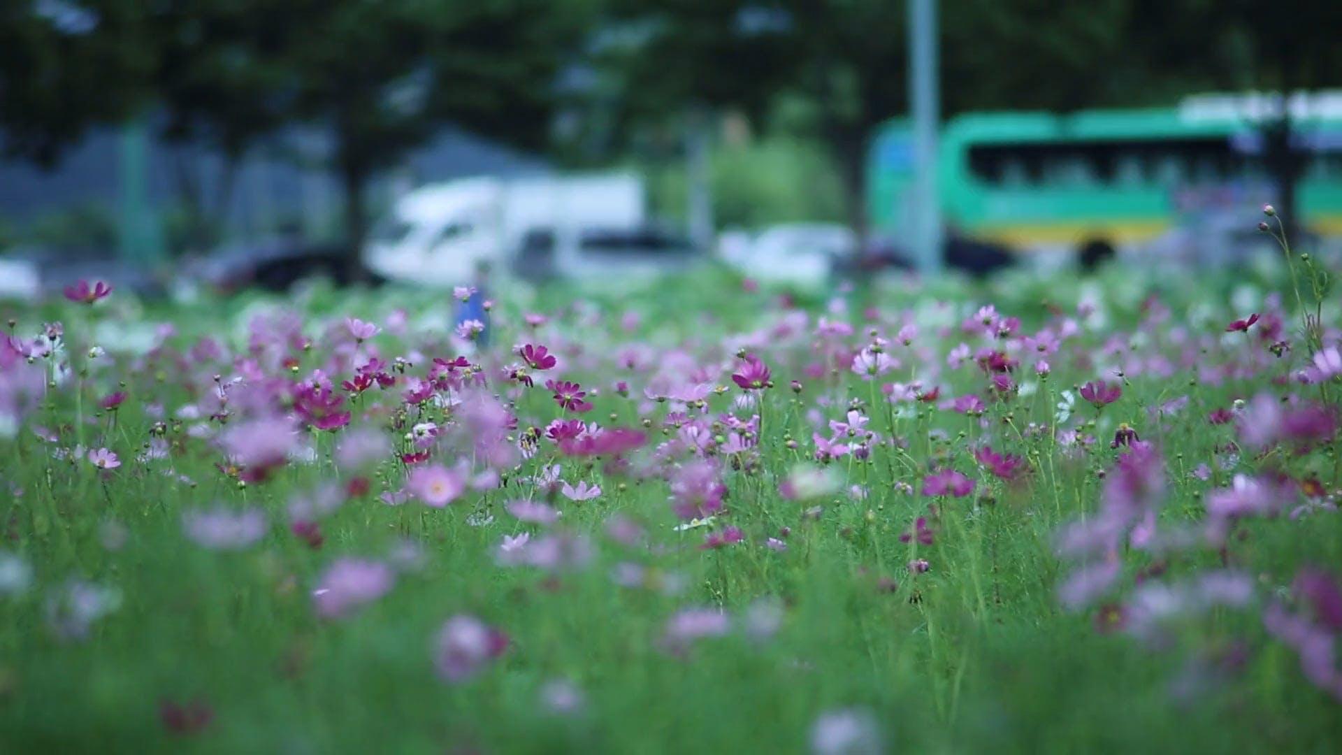 Video Of Flower Field