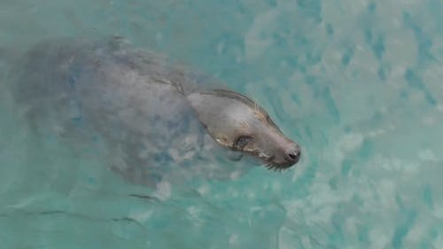 Video Of Seal Swimming