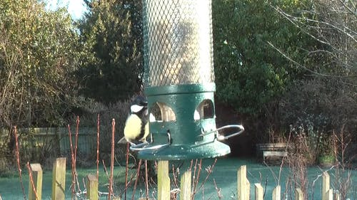 Video Of Birds Getting Food