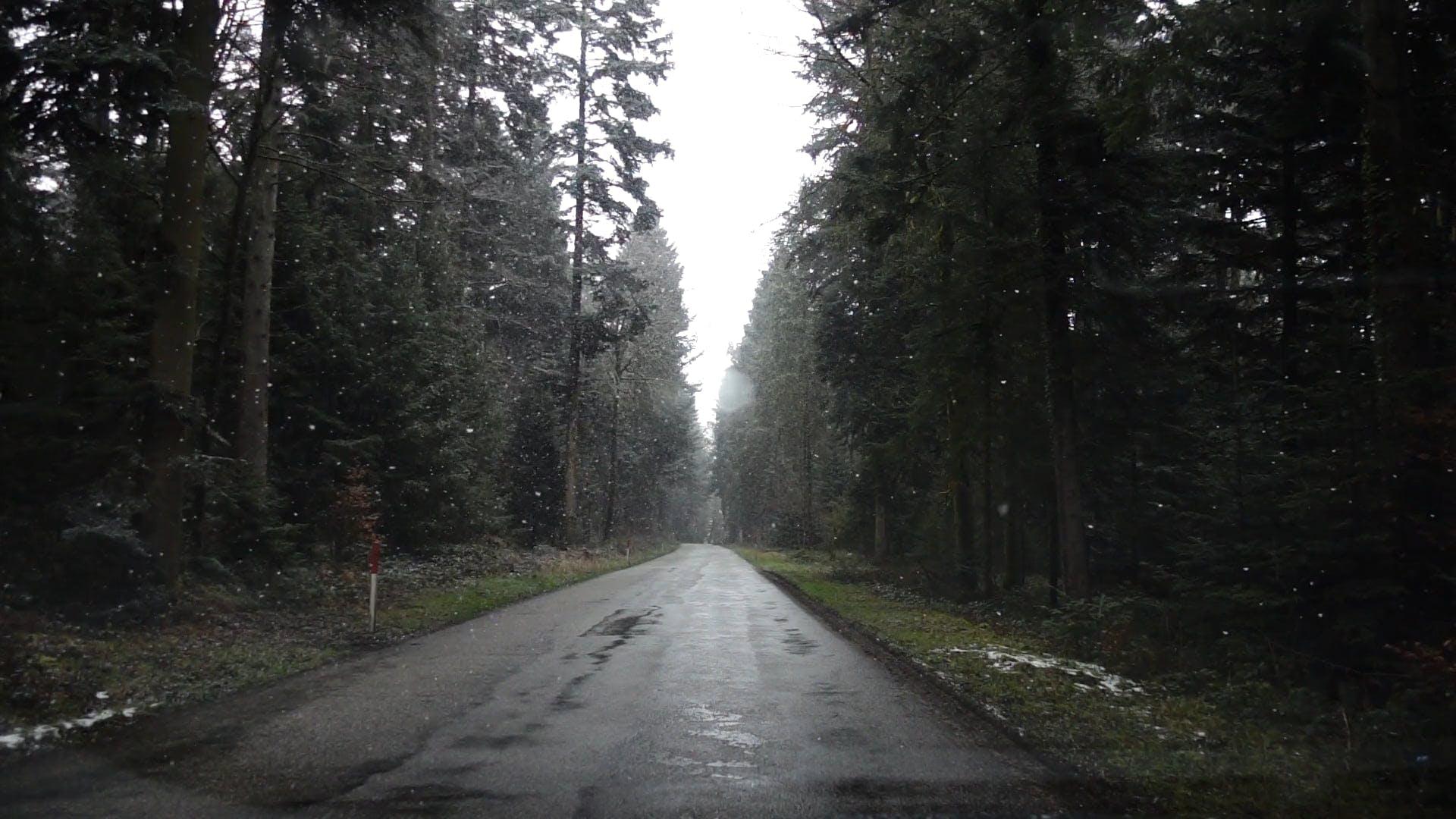 Snow Slowly Falling Down