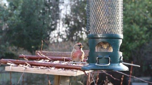 Little Bird Eating