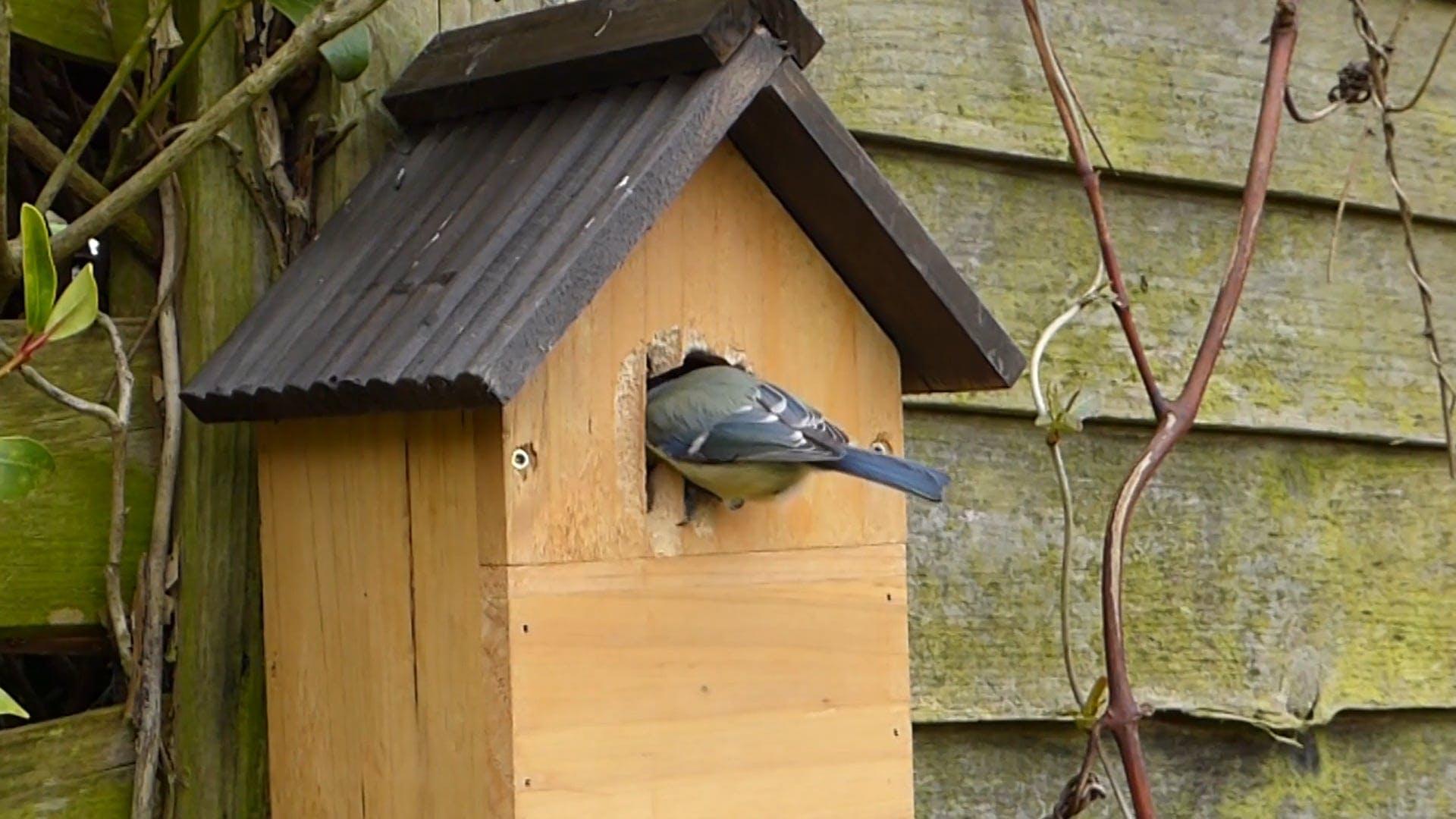 Bird Pecking Creating A Hole