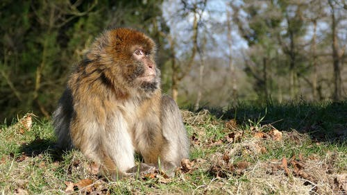 Video Of Curious Macaque