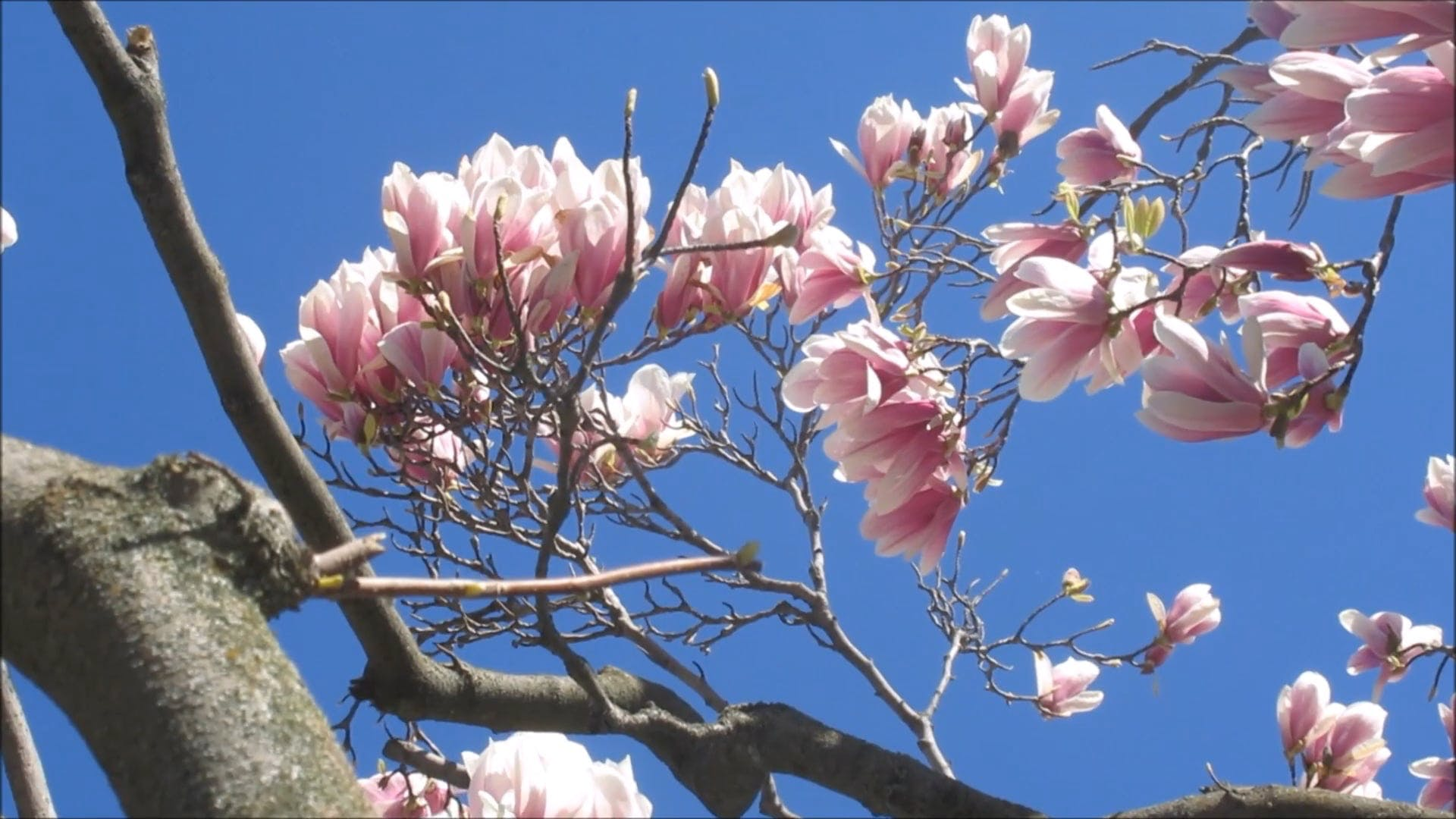 Flowers On A Tree