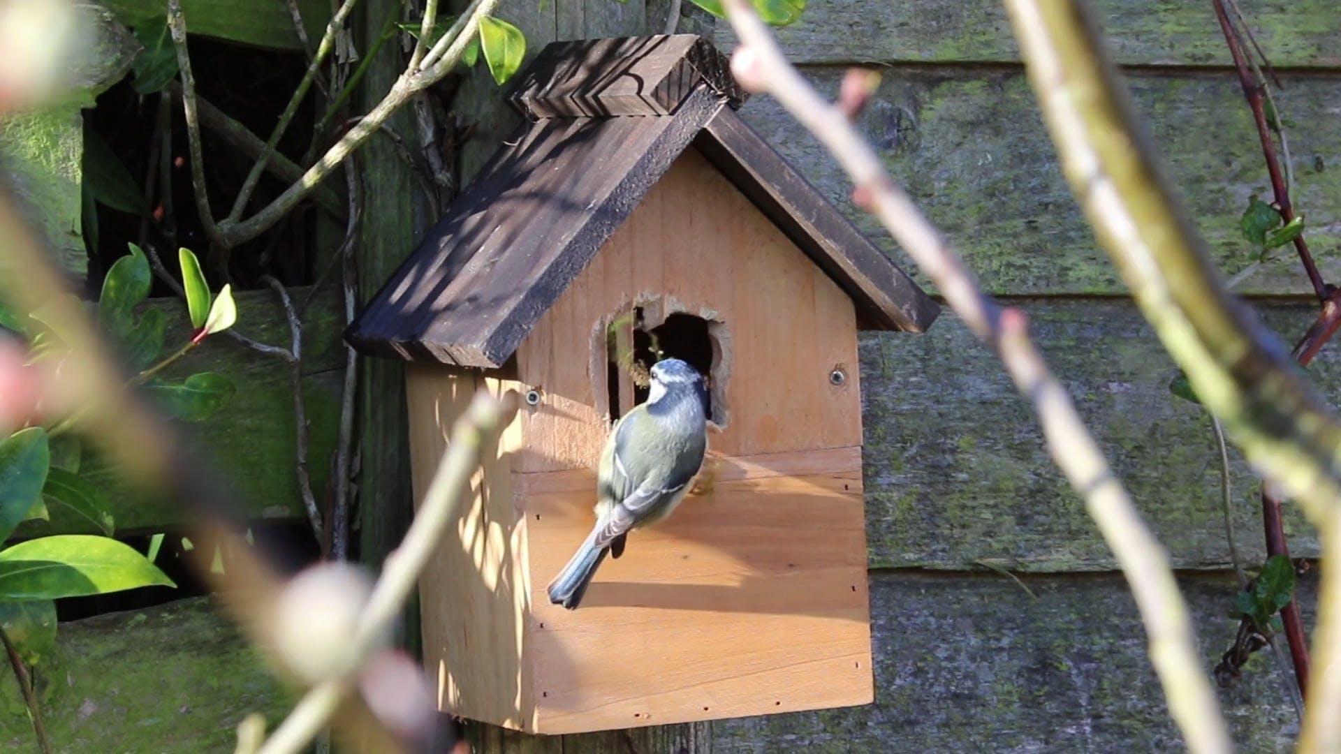 Bird Going Inside A Bird House